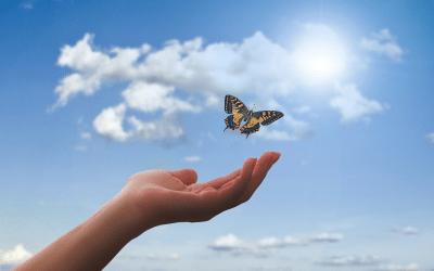 La démarche d'éducateur de santé du naturopathe holistique